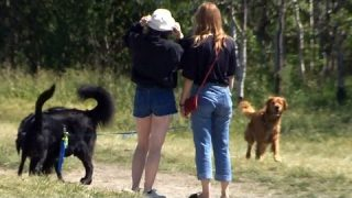 Go Fetch: New app touted as the Uber for dog walkers